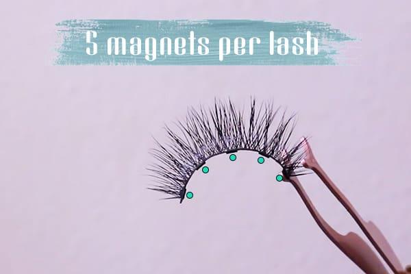 5 magnets per magnetic lash